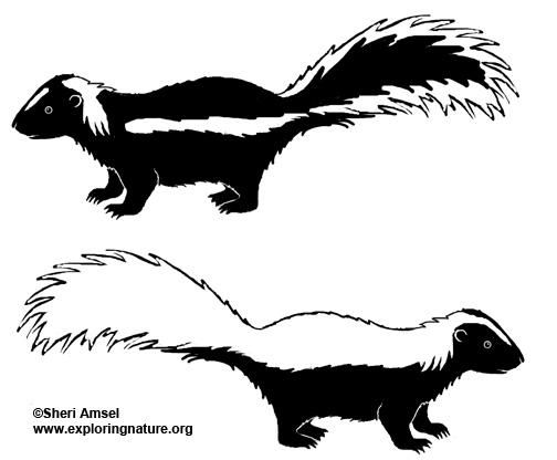 Skunk (Hooded)