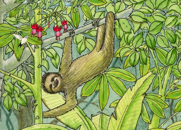 Sloth (Three-Toed)