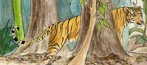 Different kinds of tiger alive today the tigers are the siberian tiger