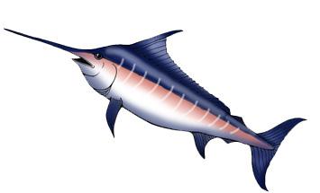 Marlin (Atlantic Blue)