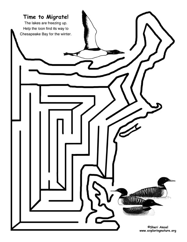 Maze - Time to Migrate