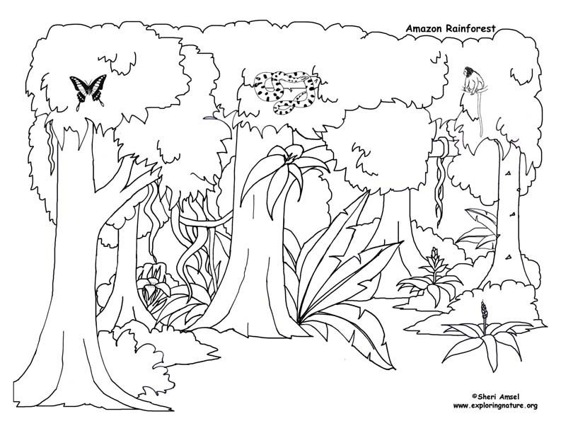 brazilian rainforest animals coloring pages - photo #38