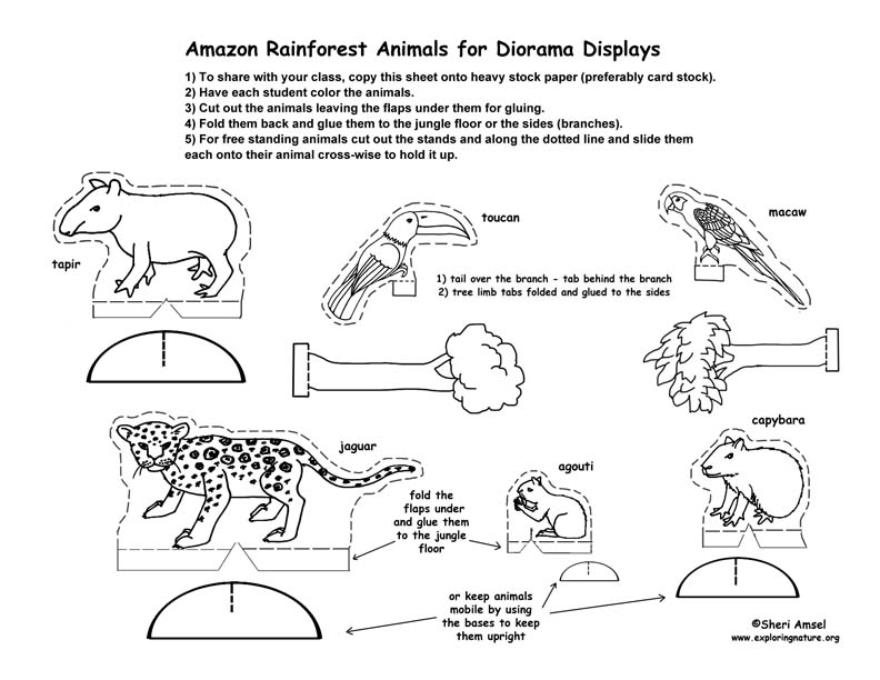 brazilian rainforest animals coloring pages - photo #49