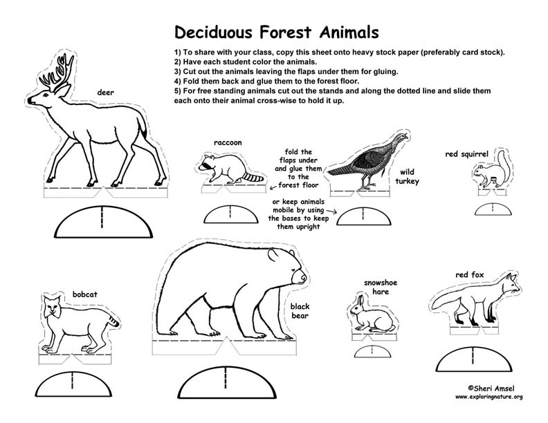 deciduous forest animals coloring pages - photo#23