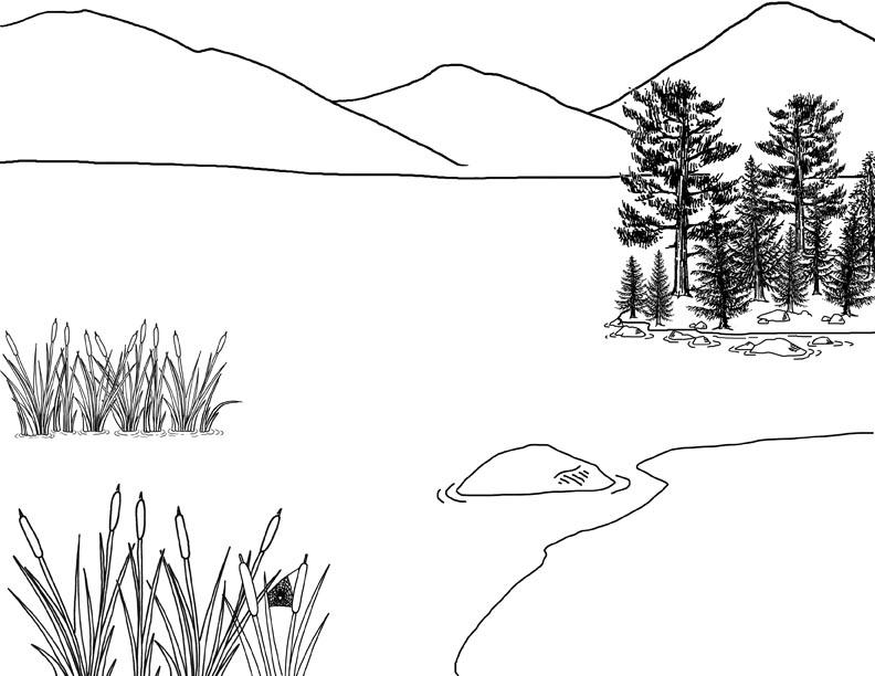 Wetland Habitat Mural