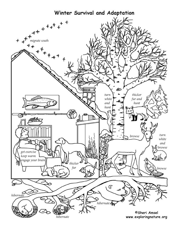 hibernation and migration coloring pages coloring page. Black Bedroom Furniture Sets. Home Design Ideas