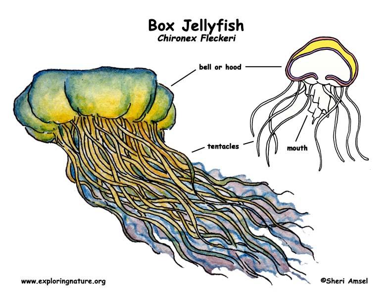 jellyfish box. Black Bedroom Furniture Sets. Home Design Ideas