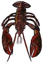 Lobster (American)