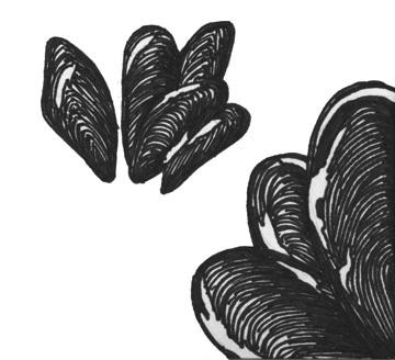Mussel (California)