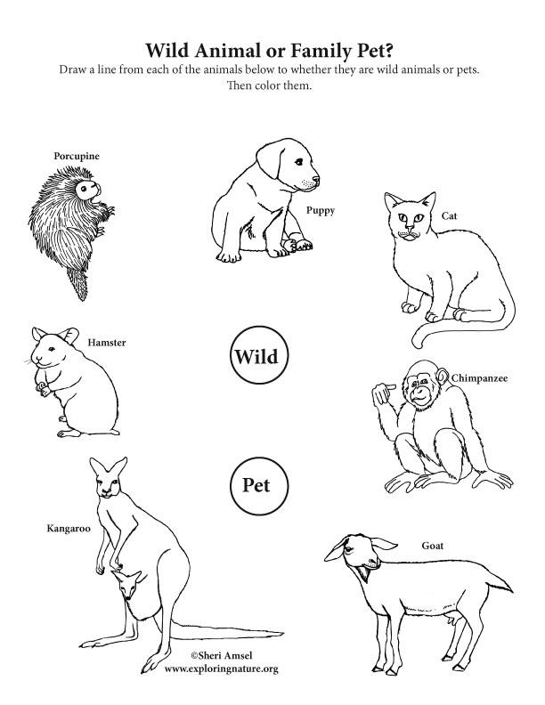 Wild Animal or Pet? Activity