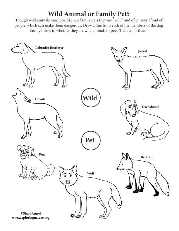 Wild Animal or Pet? Dog Family Activity
