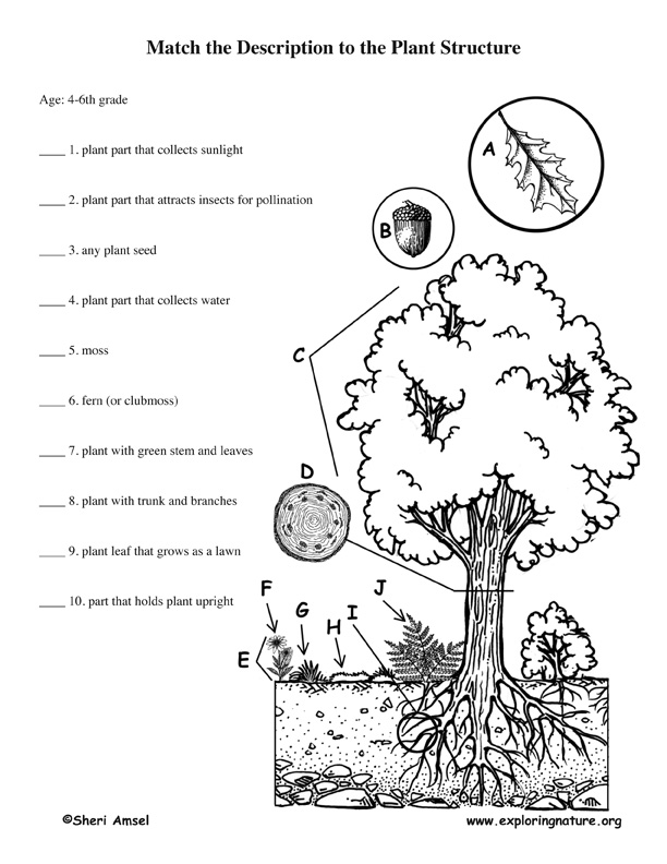 Learning About Plants - Scavenger Hunt