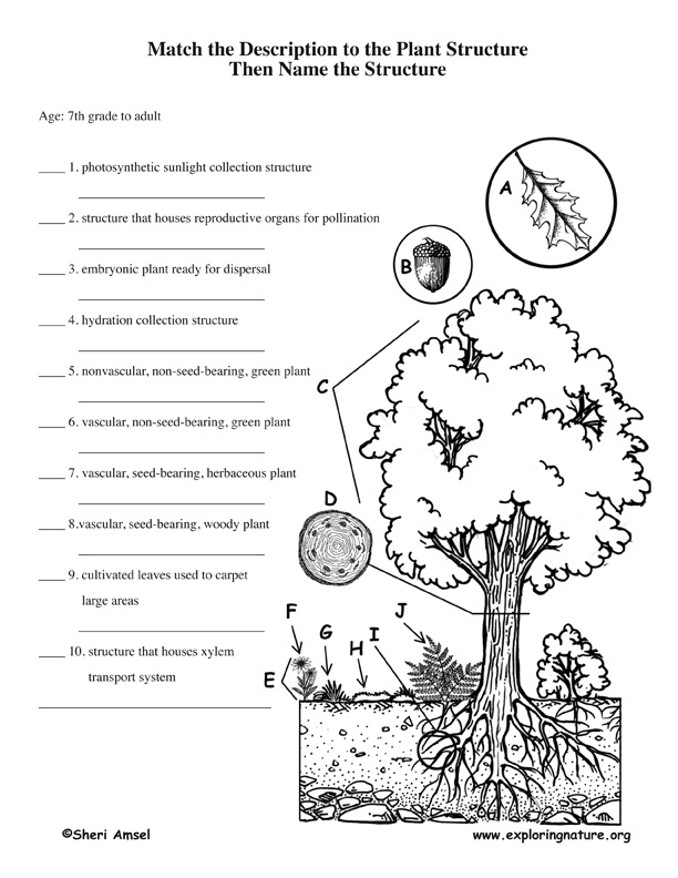 About Plants Scavenger Hunt – Vascular and Nonvascular Plants Worksheet