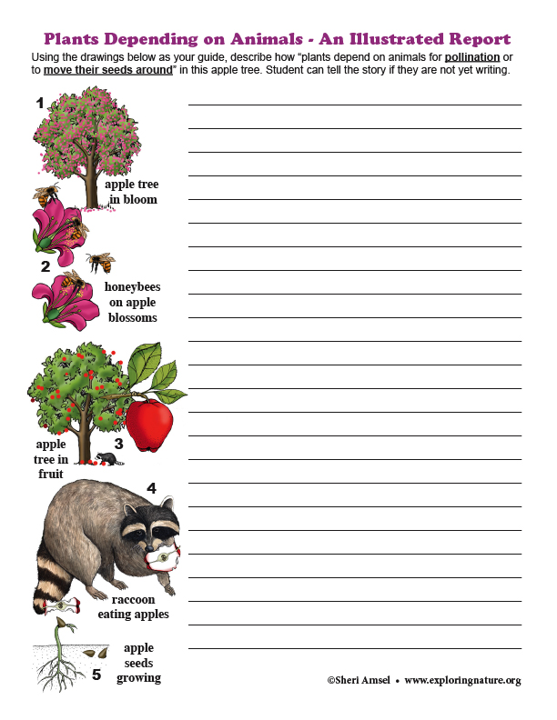 Plants Depending on Animals - An Illustrated Report