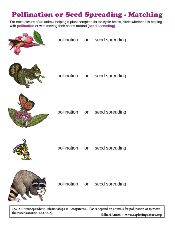 Pollination or Seed Spreading - Matching