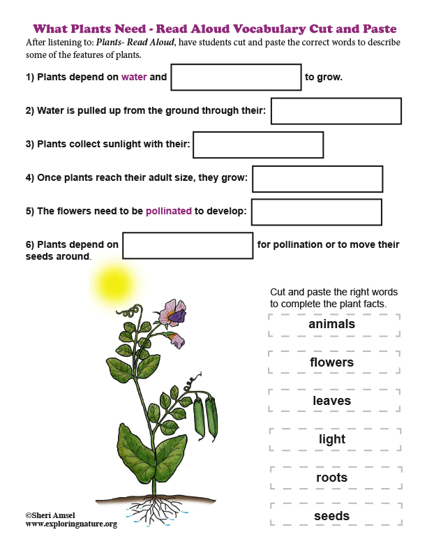 What Plants Need - Read Aloud Vocabulary Cut and Paste