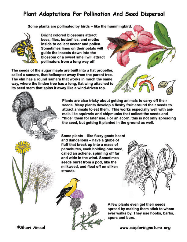 Adaptations for Pollination and Seed Dispersal Illustrated and Described