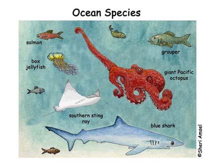 Ocean Species Poster