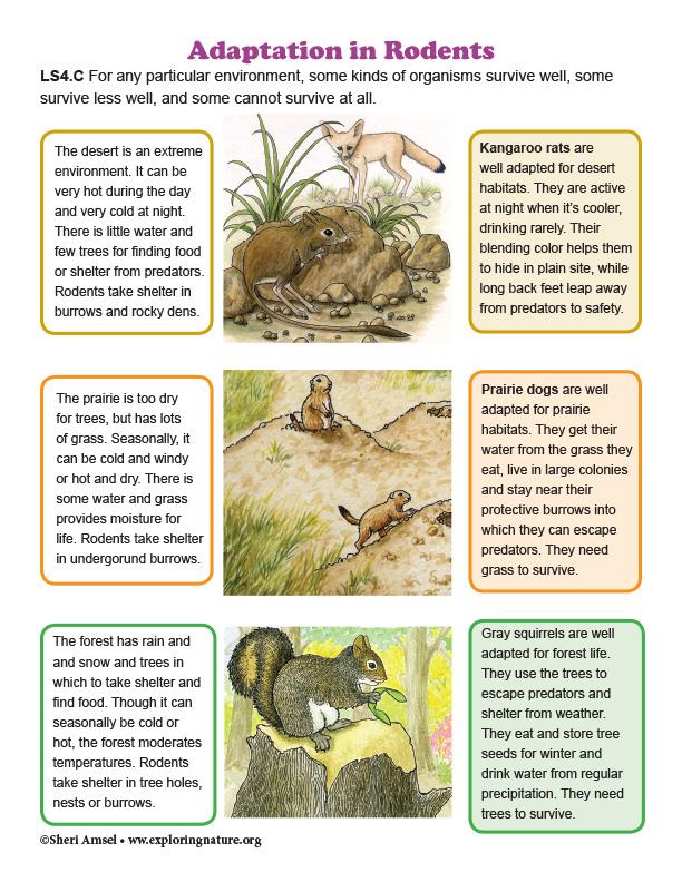 Adaptation to their Environment - Diagram
