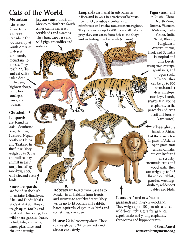 Cats of the World (with Text)