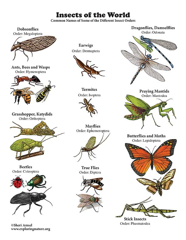 Insects of the World Poster