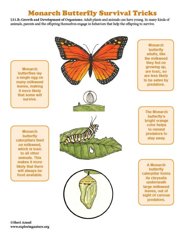 Monarch Butterfly Survival Tricks - Mini-Poster