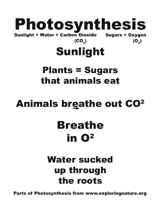 Photosynthesis Poster making