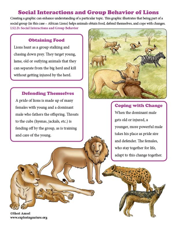 Social Interactions and Group Behavior Poster of lions