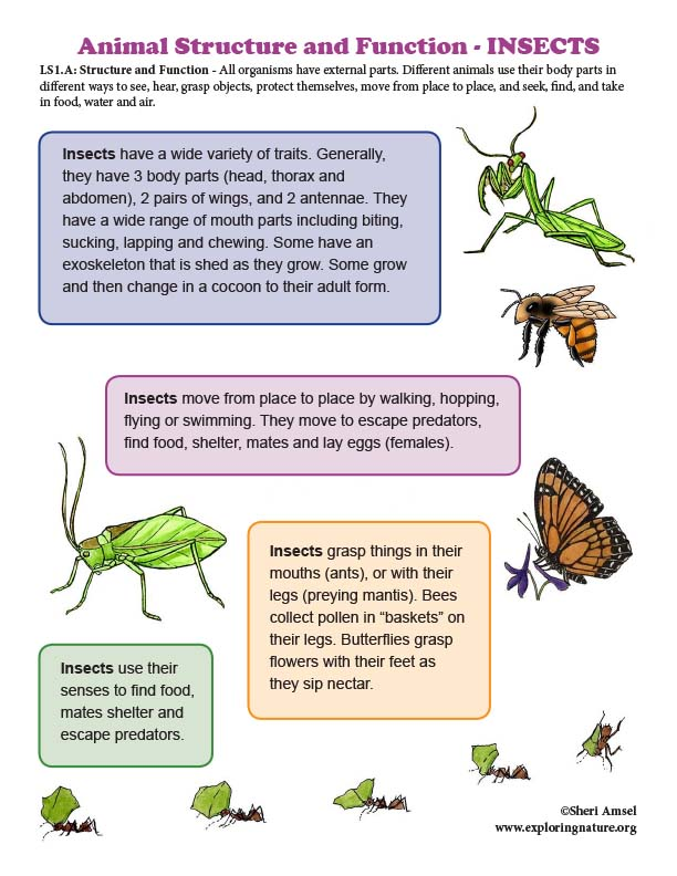 Structure and Function in INSECTS - Mini-Poster