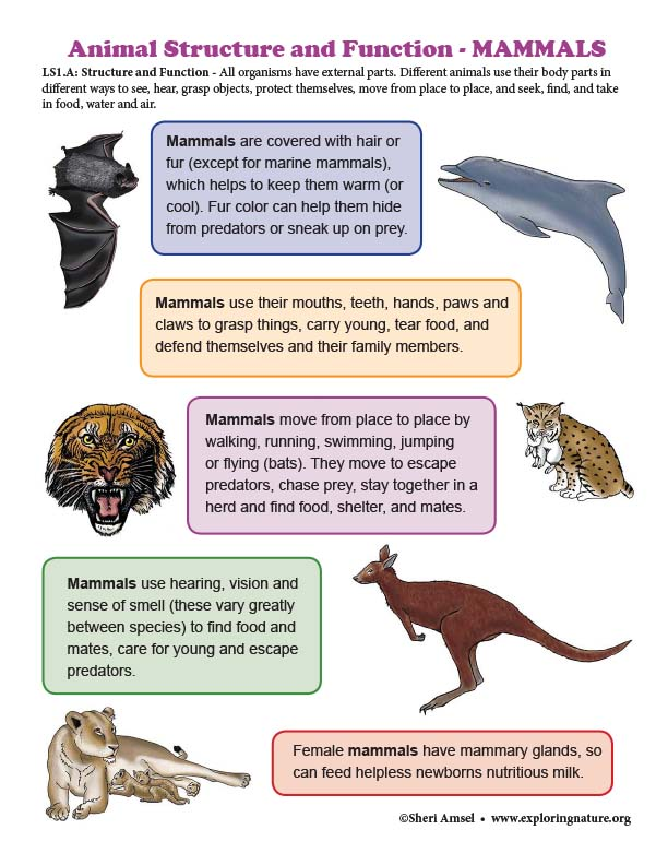Structure and Function in MAMMALS - Mini-Poster