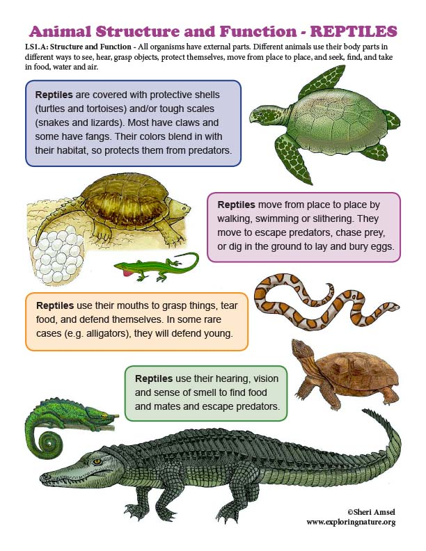 Structure and Function in REPTILES - Mini-Poster