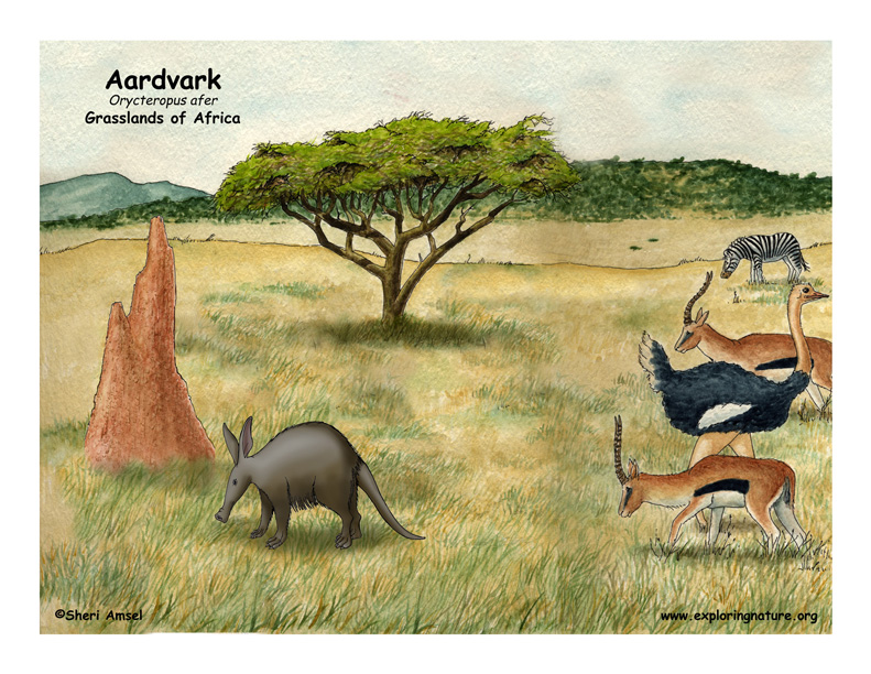 aardvark body diagrams and habitat posters
