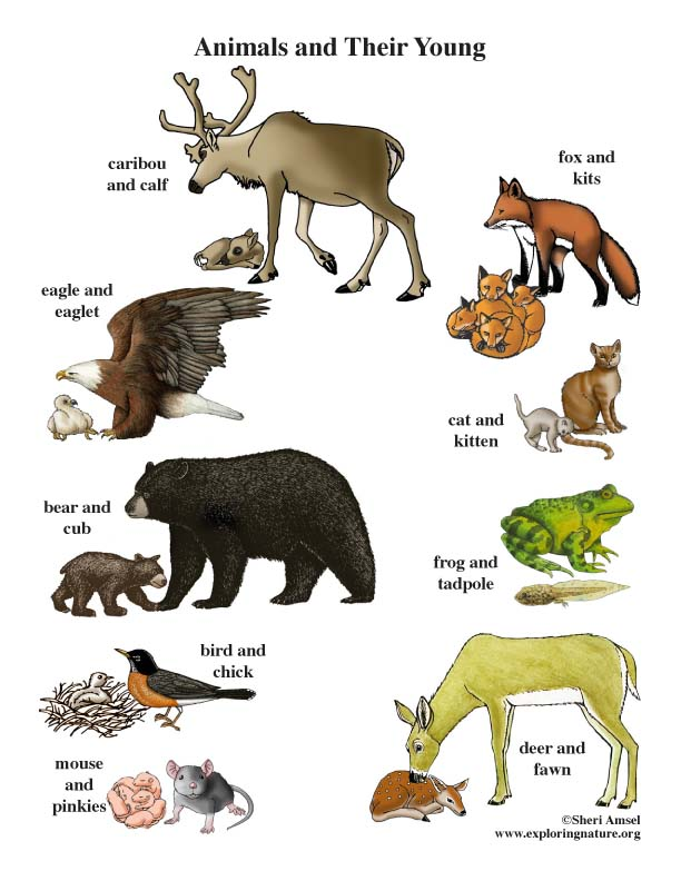 Animals and Their Young Poster
