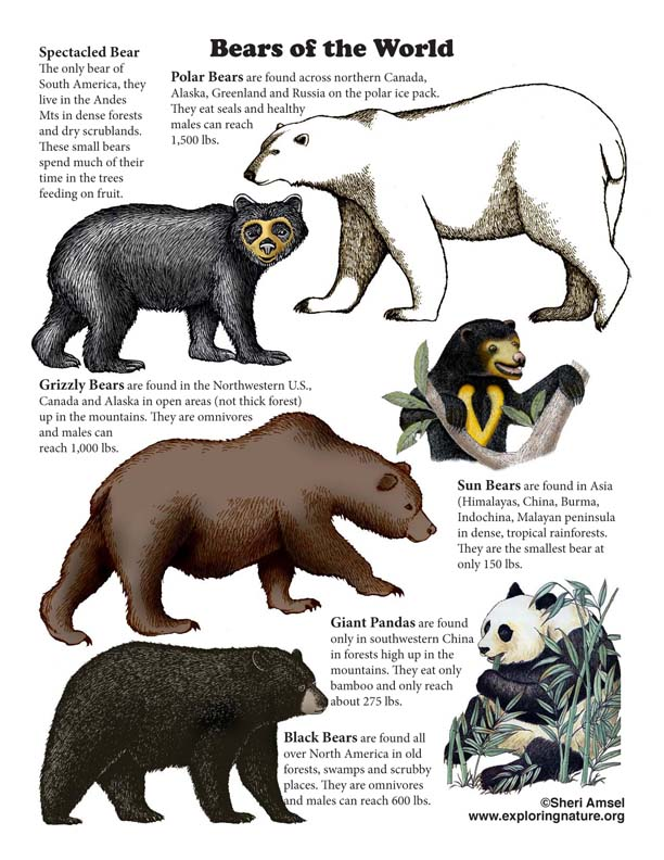 Bears of the World Poster (with Text)