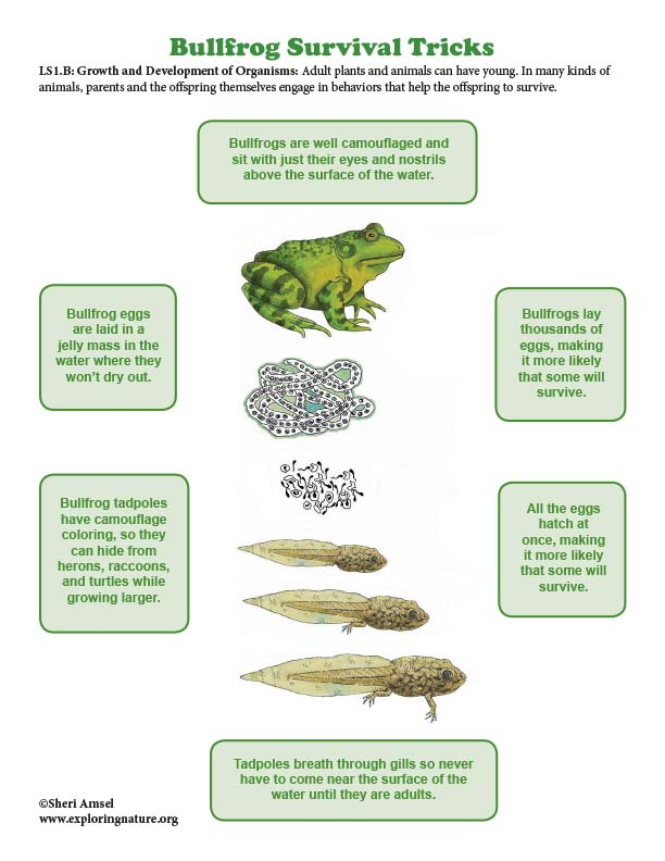 Bullfrog Survival Tricks - Mini-Poster
