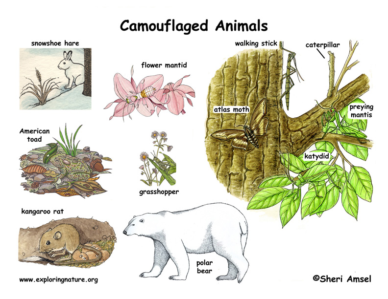 Camouflaged Animals Poster