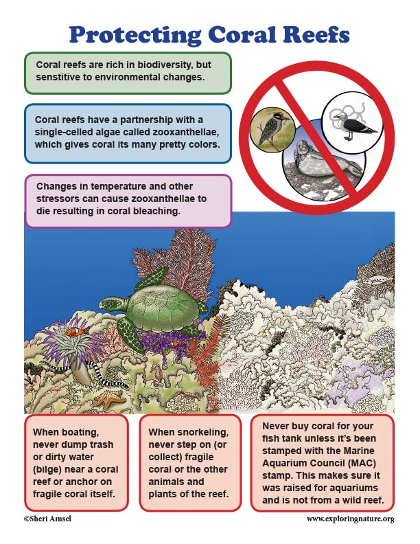 Protecting Coral Reefs - Mini-Poster