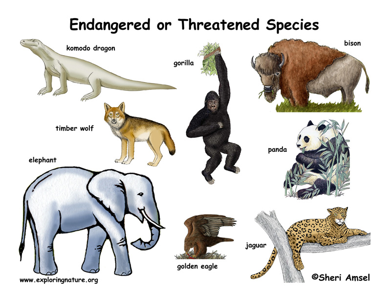 endangered species what is killing them essay Endangered species essay endangered species when the habitat of the animals and plants is taken away from them fish farming killing of native species.