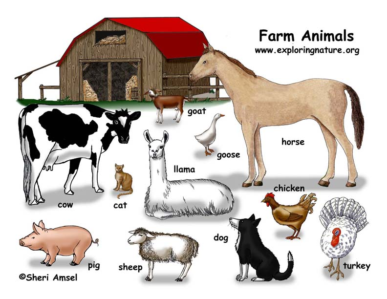 Farm Animals Illustrated and Named