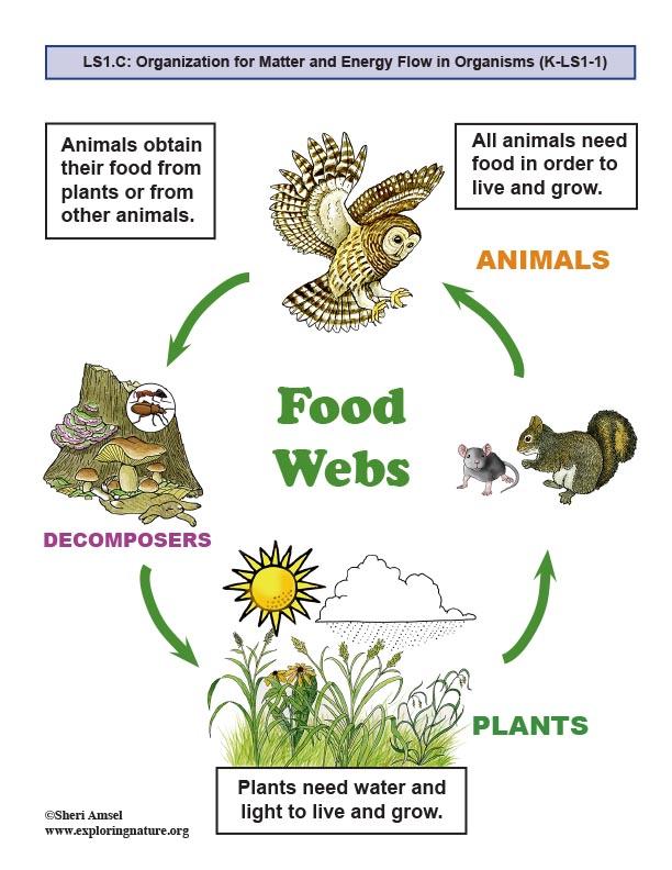 Food Web Posters (Kindergarten NGSS)