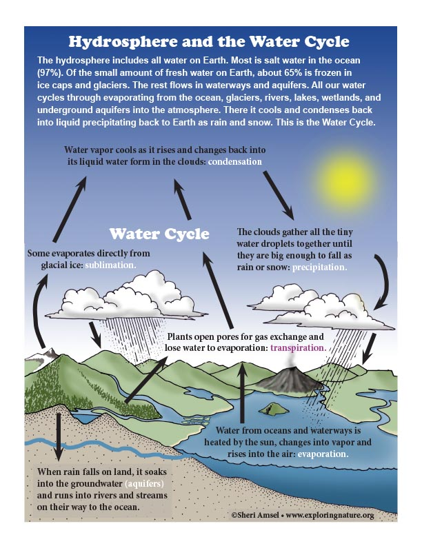 Hydrosphere And The Water Cycle Diagram Color