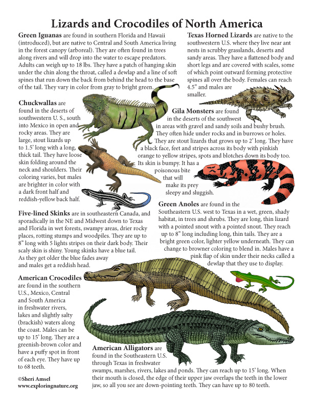 Lizards and Crocodiles of North America Mini-Poster (with Text)