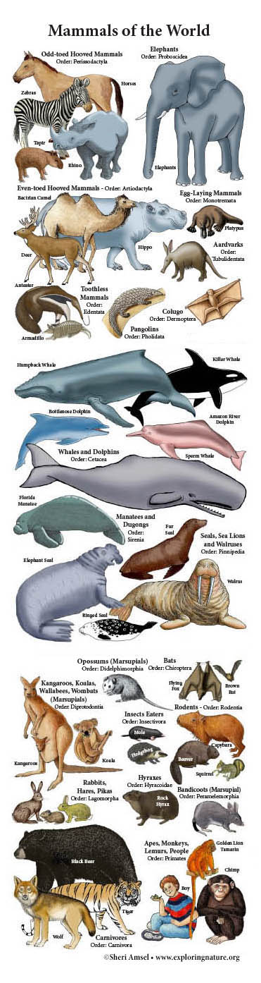 Mammals of the World Giant Poster