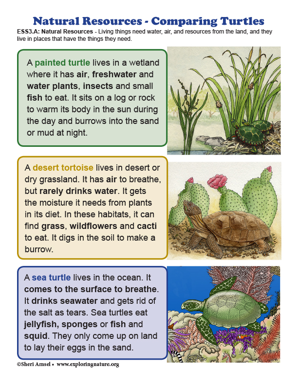 Natural Resources - Comparing Turtles Mini-Poster