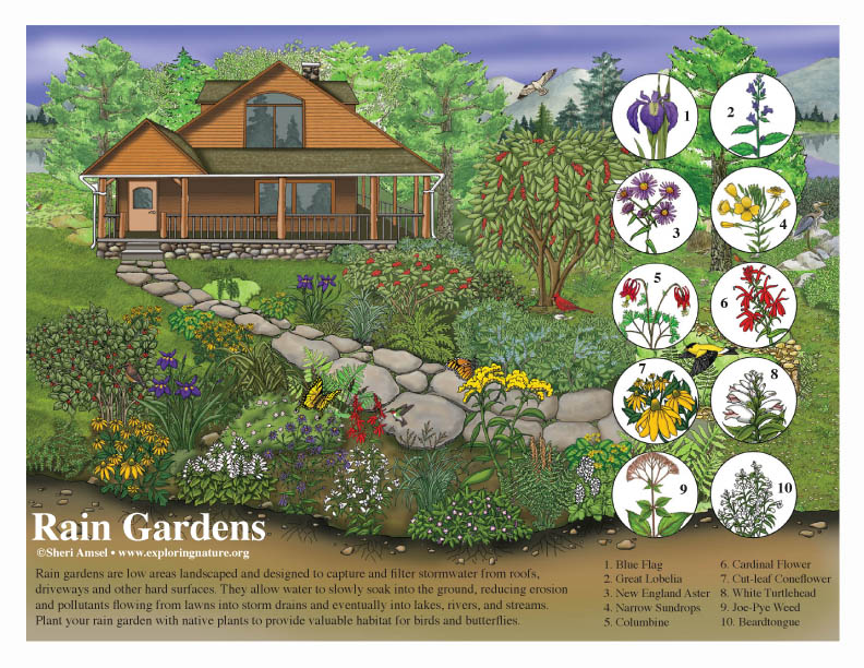 Rain Gardens - Protecting Waterways - Design Project