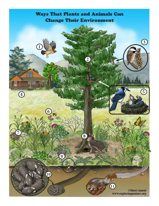 Ways That Plants and Animals Can  Change Their Environment - Diagrams
