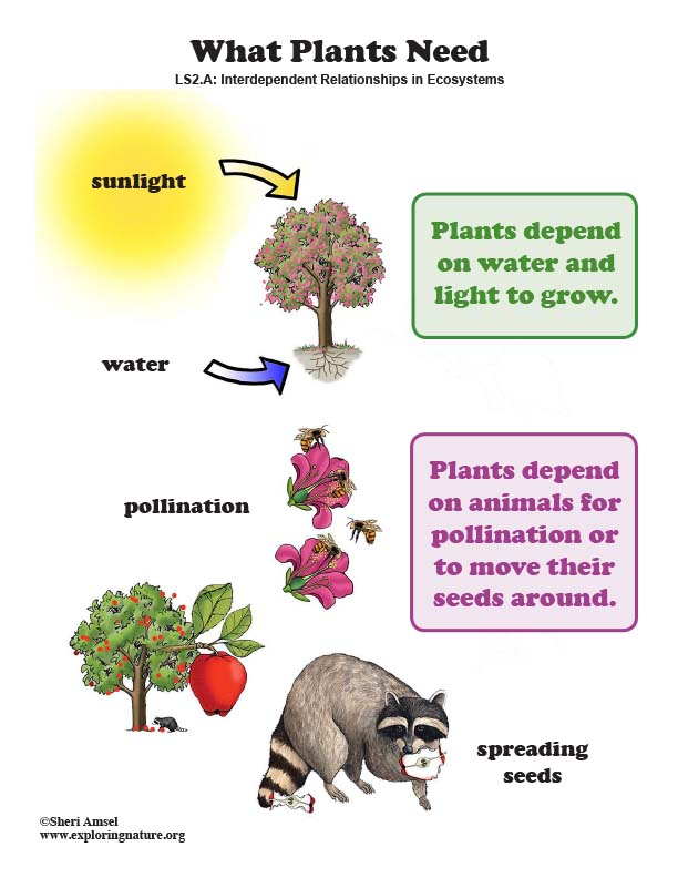 What Plants Need - Poster