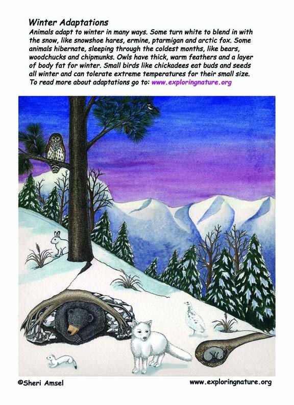 Winter Adaptation Poster