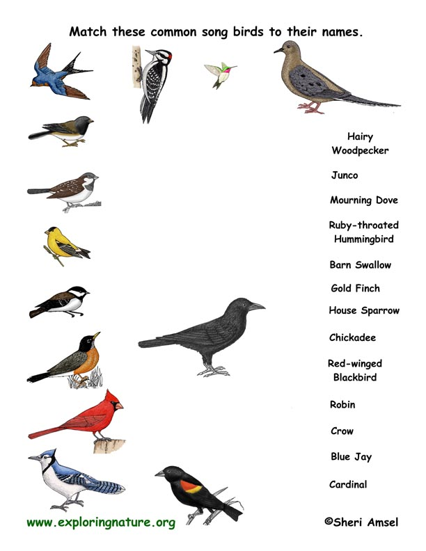 Name the Songbirds - Matching Quiz