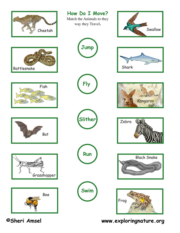 Animal Motion (Locomotion) - Matching Quiz